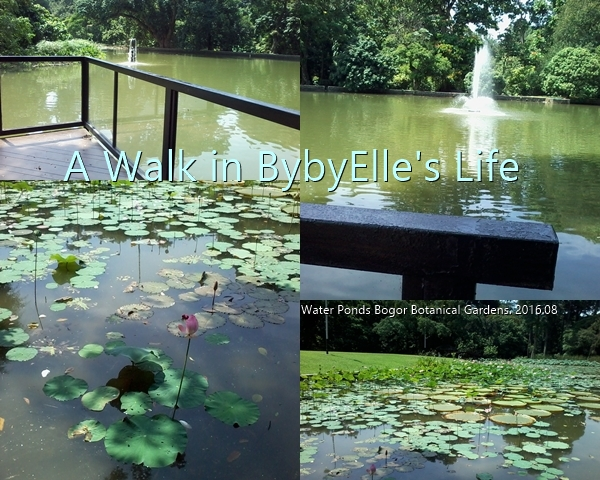 2016-08-02  A Walk in BybyElle Life Bogor Botanical Water Lily Ponds