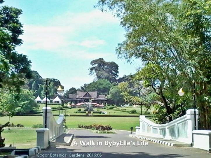 20160802_121836 A Walk in BybyElle Bogor Botanical Gardens