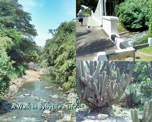 A Walk in BybyElle Life Creek Bogor Botanical Garden